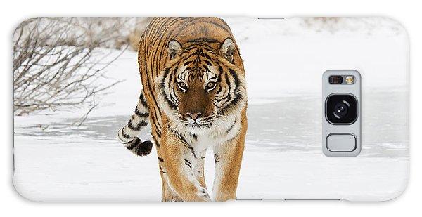 Prowling Tiger Galaxy Case