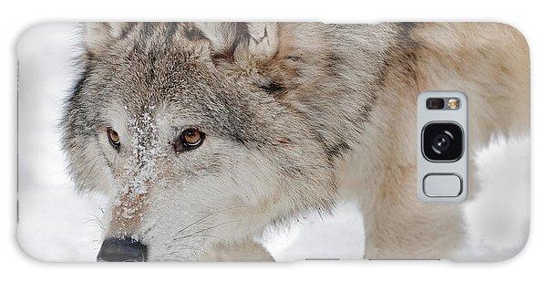 Prowling Wolf Galaxy Case