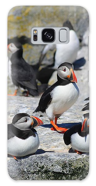 Puffins At Rest Galaxy Case