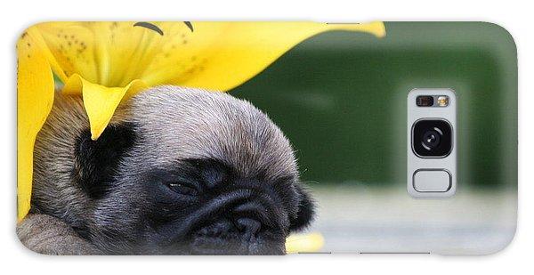 Puggy Face Bouqet Galaxy Case