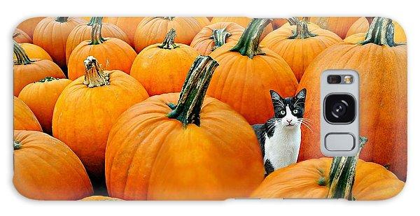 Pumpkin Patch Cat Galaxy Case