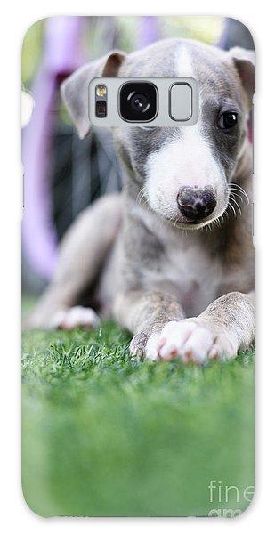 Sighthound Galaxy Case - Whippet Puppy by Amir Paz