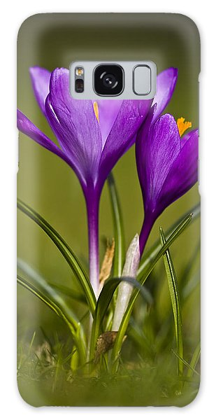 Purple Crocus Galaxy Case by Gabor Pozsgai