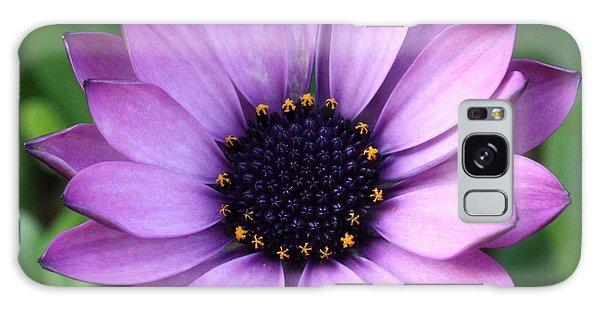 Purple Daisy Square Galaxy Case
