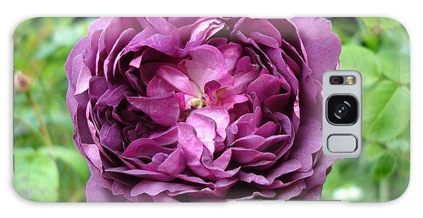 Purple English Rose Galaxy Case