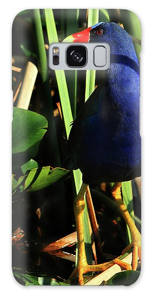 Purple Gallinule Galaxy Case