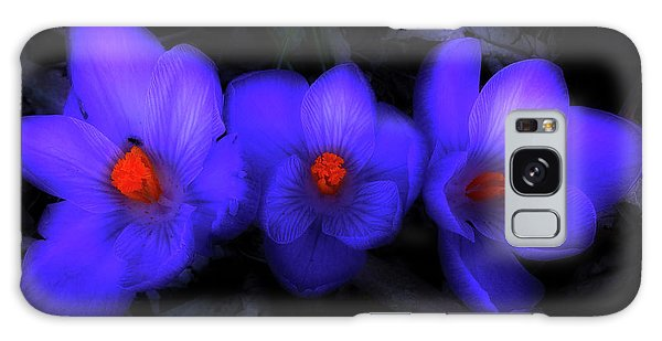 Beautiful Blue Purple Spring Crocus Blooms Galaxy Case