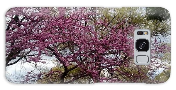 Purple Spring Trees Galaxy Case