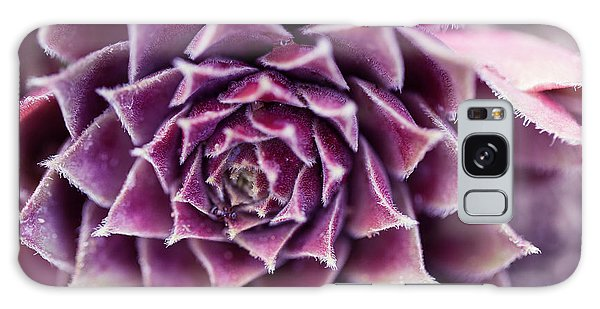 Purple Succulent Plant Blossom In Summer Galaxy Case