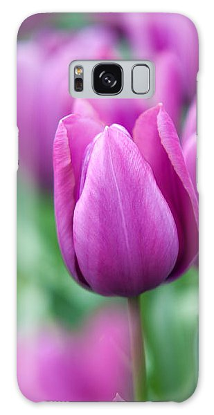 Purple Tulips Of Keukenhof Galaxy Case