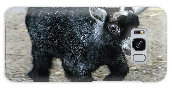 Pygmy Goat Kid Galaxy Case