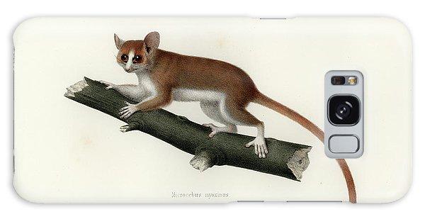 Pygmy Mouse Lemur Galaxy Case
