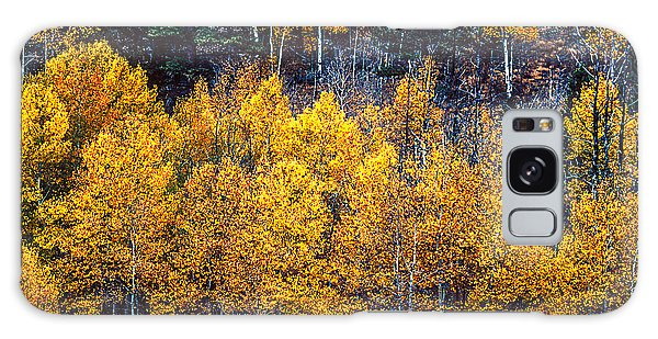 Aspen In Fall Colors In Eleven Mile Canyon Colorado Galaxy Case by John Brink