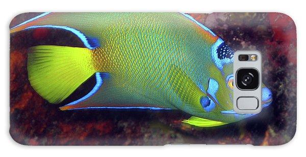 Queen Angelfish, U. S. Virgin Islands 2 Galaxy Case