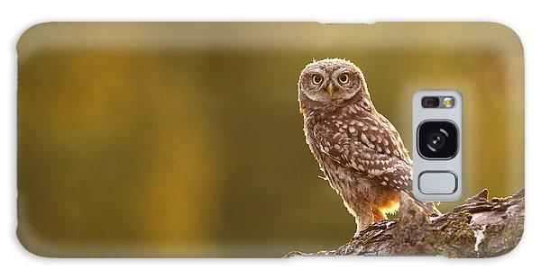 Qui, Moi? Little Owlet In Warm Light Galaxy Case by Roeselien Raimond