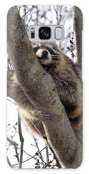 Afternoon Nap-raccoon Up A Tree  Galaxy Case