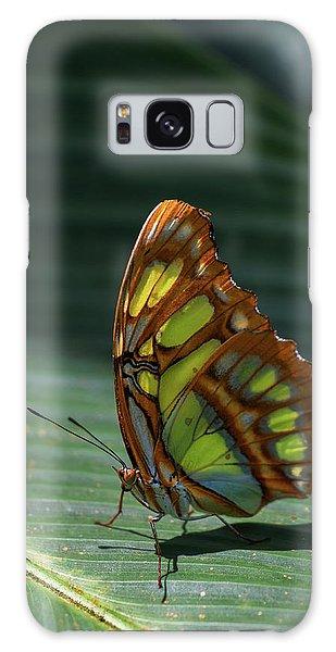 Rainforest Butterfly Galaxy Case
