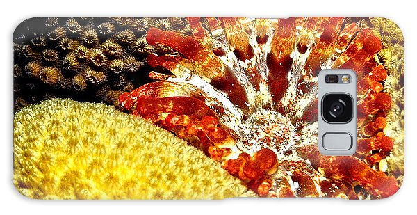 Rare Orange Tipped Corallimorph - Fire In The Sea Galaxy Case by Amy McDaniel