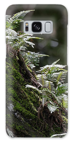 Reach For The Light Galaxy Case by Christopher L Thomley