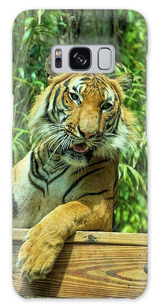 Reclining Tiger Galaxy Case