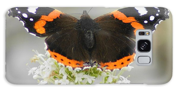 Red Admiral Feeding Galaxy Case