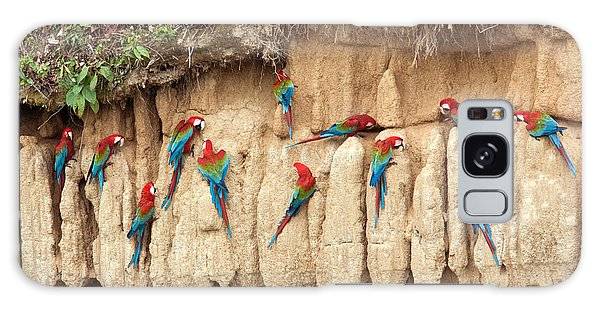 Red And Green Macaws Eating Minerals Galaxy Case