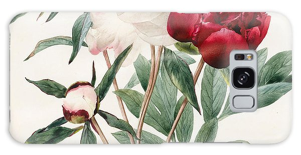 Plants Galaxy Case - Red And White Herbaceous Peonies by Louise D'Orleans