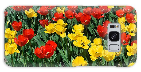 Red And Yellow Tulips  Naperville Illinois Galaxy Case