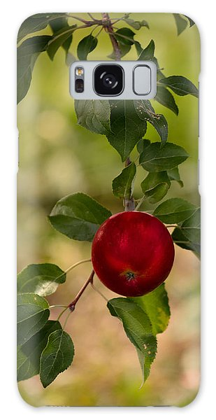 Red Apple Ready For Picking Galaxy Case