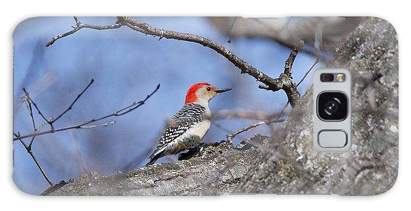 Red-bellied Woodpecker 1134 Galaxy Case by Michael Peychich