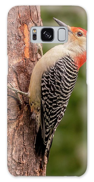 Red Bellied Woodpecker 3 Galaxy Case
