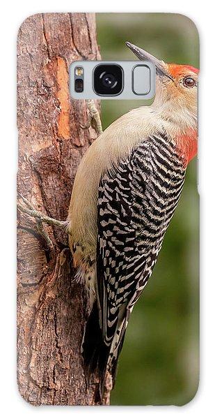 Red Bellied Woodpecker 3 Galaxy Case