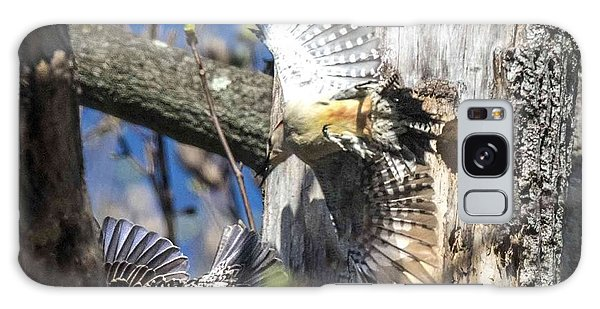 Red Bellied Woodpecker Chasing An Attacking Starling Galaxy Case