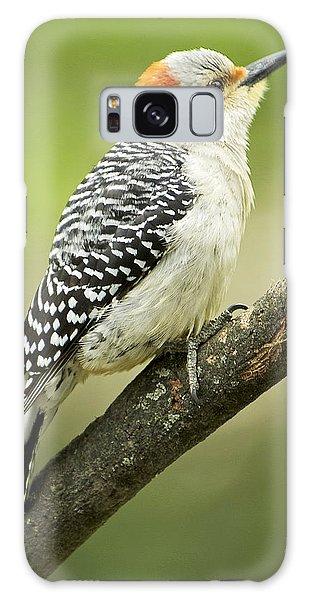 Red Bellied Woodpecker, Female On Tree Branch Galaxy Case