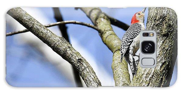 Red-bellied Woodpecker Galaxy Case by Gary Wightman
