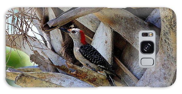 Red-bellied Woodpecker Hides On A Cabbage Palm Galaxy Case by Barbara Bowen