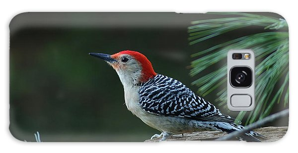 Red-bellied Woodpecker In The Pines Galaxy Case