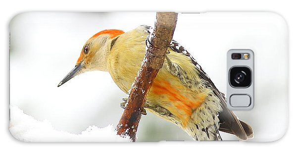 Red-bellied Woodpecker With Snow Galaxy Case