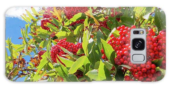 Red Berries, Blue Skies Galaxy Case