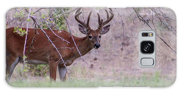 Galaxy Case featuring the photograph Red Bucks 2 by Antonio Romero