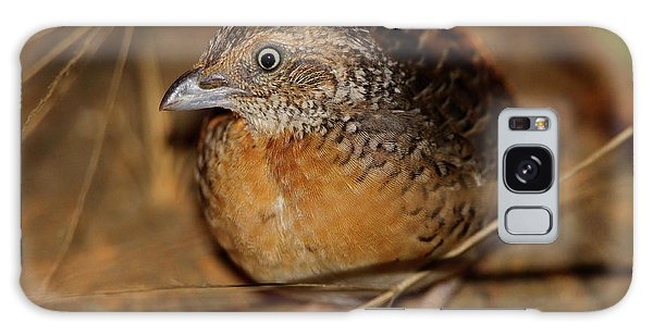 Red-chested Button-quail Galaxy Case
