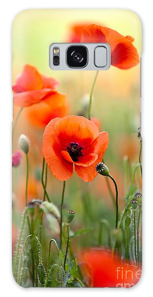 Blossoms Galaxy Case - Red Corn Poppy Flowers 06 by Nailia Schwarz