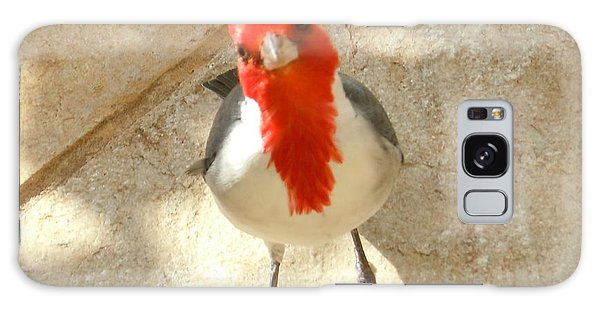 Red-crested Cardinal At My Feet Galaxy Case