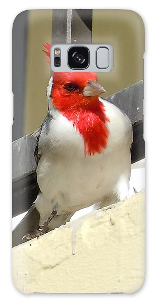 Red-crested Cardinal Posing On The Balcony Galaxy Case