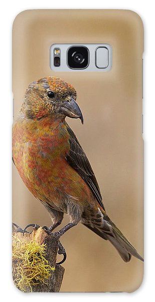 Red Crossbill Galaxy Case by Doug Herr