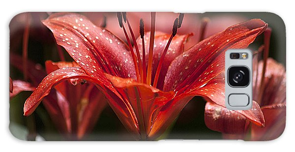 Red Day Lily 20120615_52a Galaxy Case by Tina Hopkins