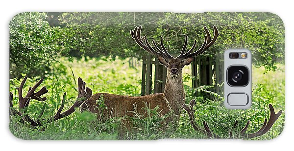 Red Deer Stag Galaxy Case by Rona Black