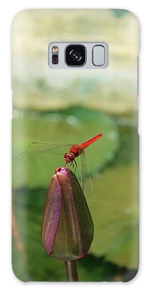 Red Dragonfly At Lady Buddha Galaxy Case