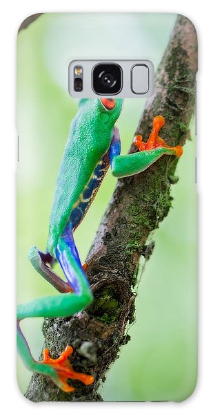 red eyed tree frog Costa Rica Galaxy Case