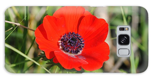 Red Anemone Coronaria 4 Galaxy Case